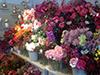 Onze winkel in Schoonebeek